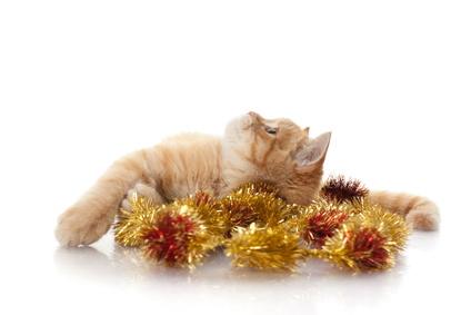 クリスマスの仔猫